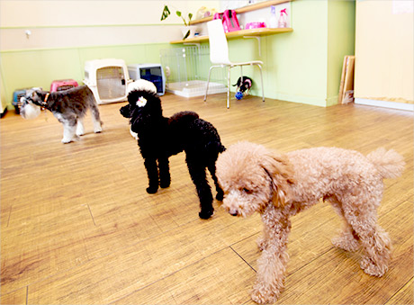 犬の保育園の一日
