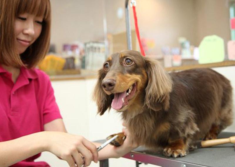 犬の美容室 送迎サービス