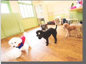 犬の美容室イメージ