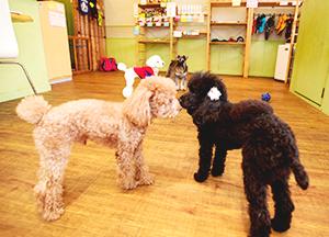 犬の保育園登園イメージ