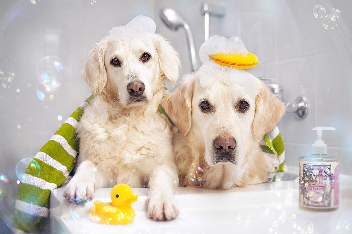 dog_image